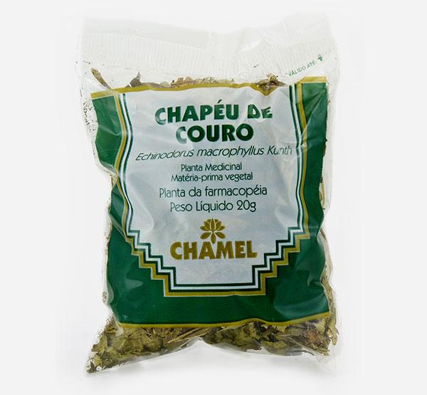 Chapéu de Couro Folhas (Echinodorus grandiflorus) - Chamel 5480c1e01cd